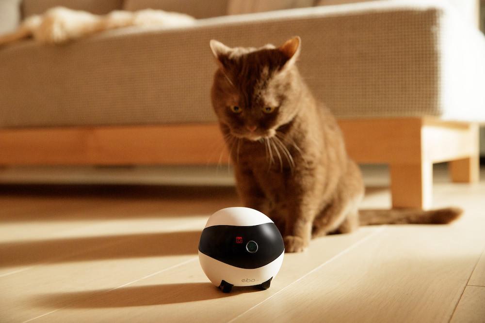 Überwachungskamera für Katzen